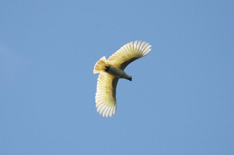 bird-r41