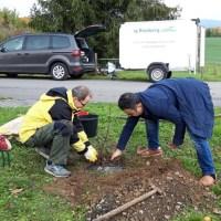 Wer will bei der Pflege der Obstbäume helfen?