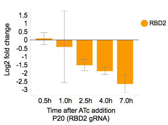 ATc addition RBD2 repressed by CRISPRi