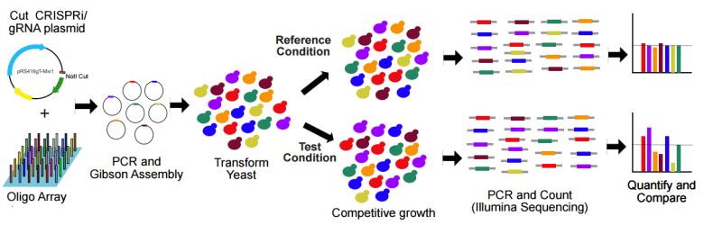 workflow for high-throughput CRISPRi in yeast