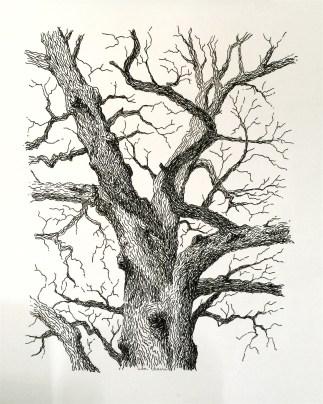 Old Bur, ink