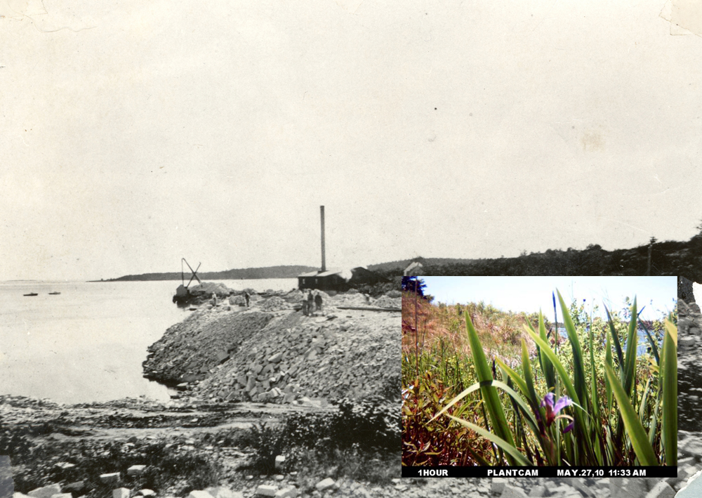Aviva Rahmani, Permaculture Before After (Ghost Nets site before, in 1930, courtesy of the Vinalhaven Historical Society, with an inserted still from 2011 of the restored site)