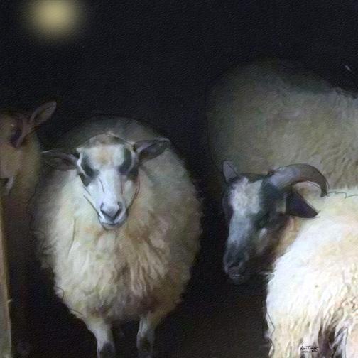 MS tracy Silence Sheep12x12web copy