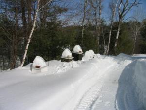 Hives in Snow - Maine