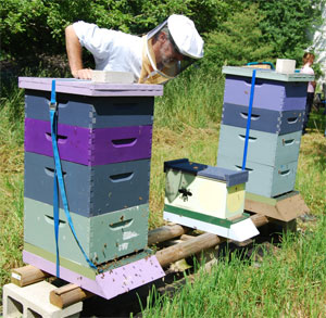 Cumberland Couunty Beekeepers club hives and nuc