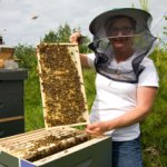 Please Support LD 1184 – An Act to Limit Liability of Apiary Owners and Operators