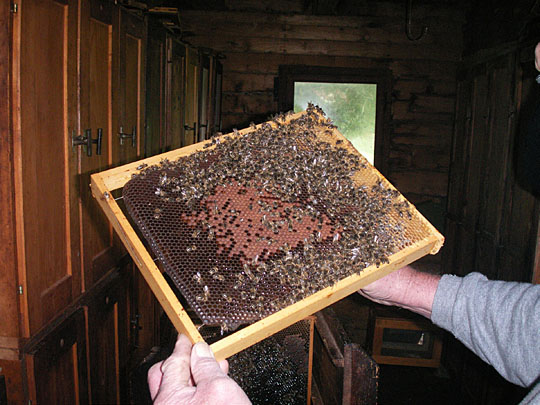 The bees are cozied-up for colder months with insulating blankets wrapped around the vacant areas in the file-cabinet-styled hive enclosures.