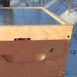 Honey Bees Peeking Out - Winter Feeding in Maine