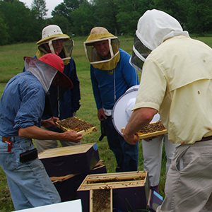 Hive Inspection in Maine
