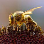 Beekeeper's Calendar: September
