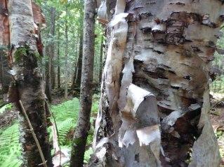 loggingmuseum 1