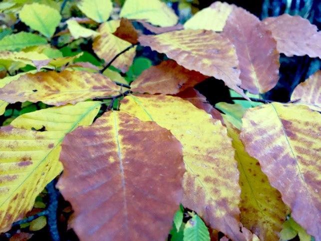 Massabesic Forest Lyman