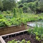 Raised bed in organic garden