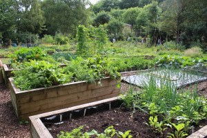 Raised bed in organic garden