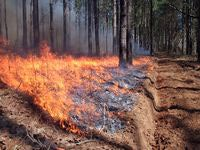 Cutting fire breaks and setting controlled burns are a large part of the job.