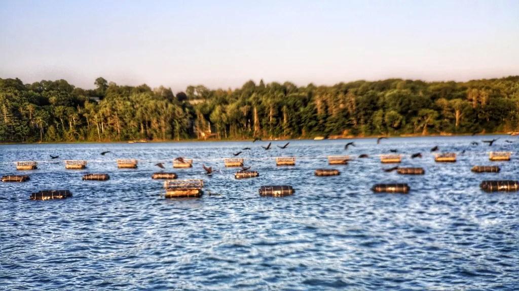 An oyster farm