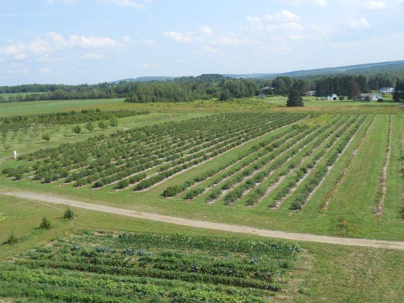 Farm ID 3126