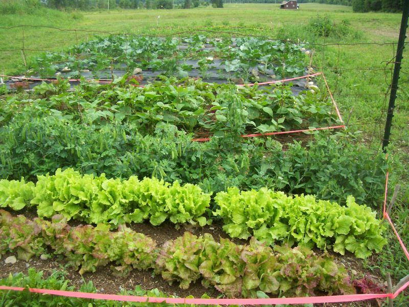 Farm ID 2514