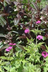 Perennial-Meadow-Spring-09