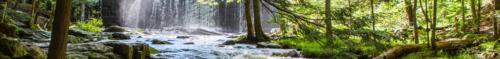 Banner-Vaugn Woods