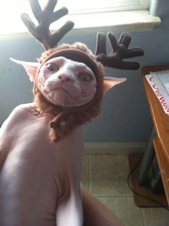 Животные против Нового года и Рождества (35 фото)