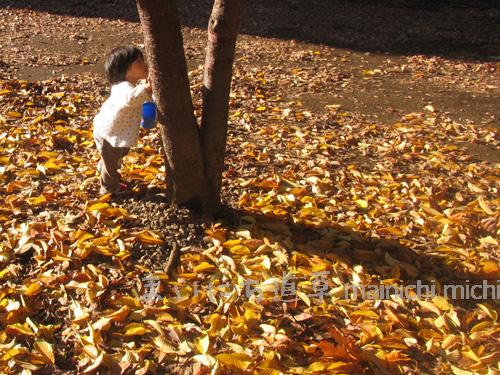 葉っぱとあそぶ娘