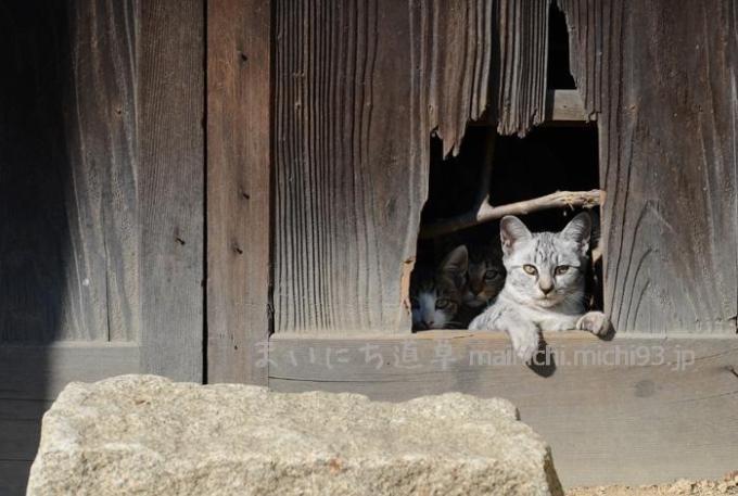 空き家に住み着いてる子猫ちゃんたち