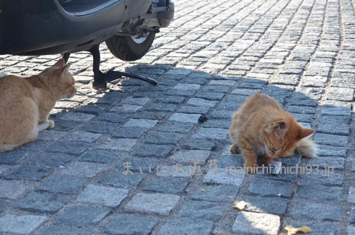 魚を食べる野良猫
