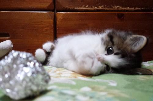 羊毛フェルト 猫の目の色