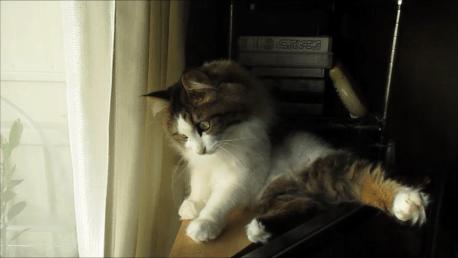ハエと戦う猫