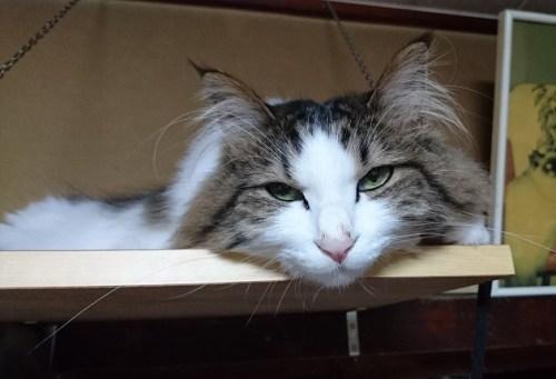 猫は留守番中なにをしているのか?