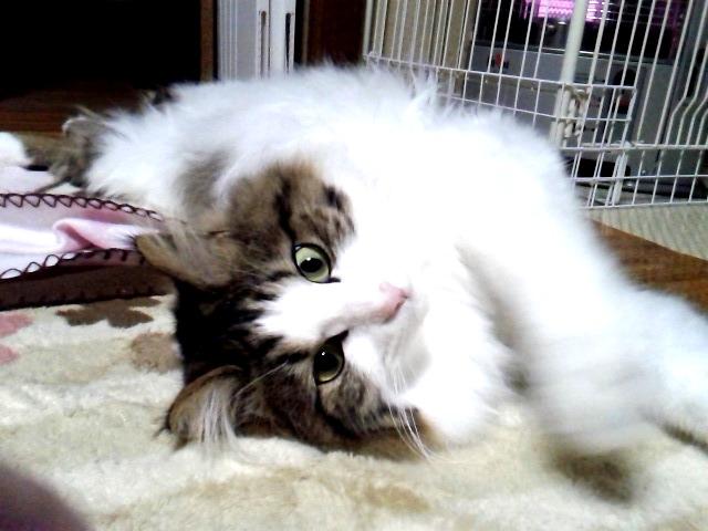 ストーブで温まる猫