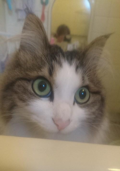風呂を覗く猫の画像
