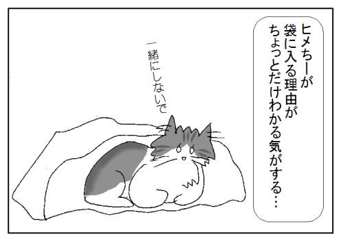 猫が袋に入る理由