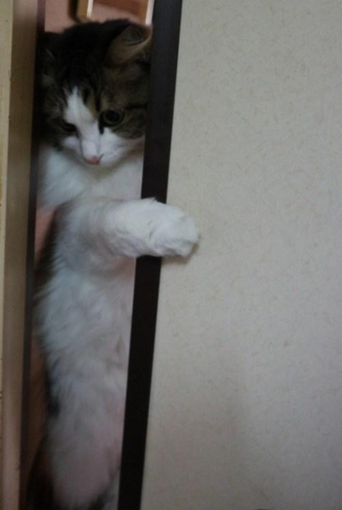 隙間に体をねじ込む猫