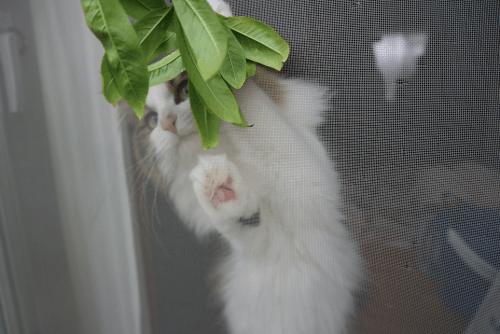 桃の枝で遊ぶ猫