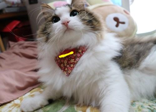 雪月花猫用の首輪