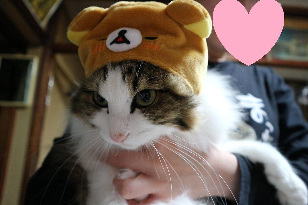 リラックマ 猫用の帽子をかぶる猫