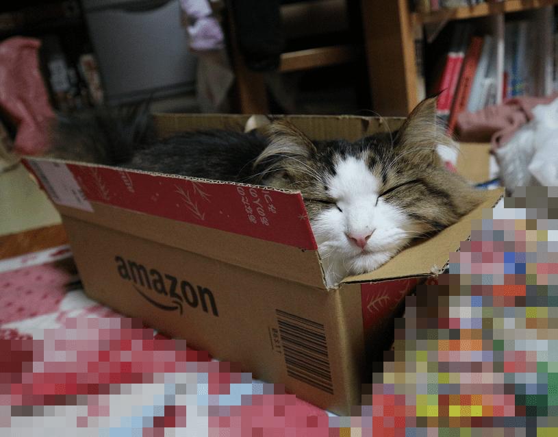 小さい箱に入って満足する猫