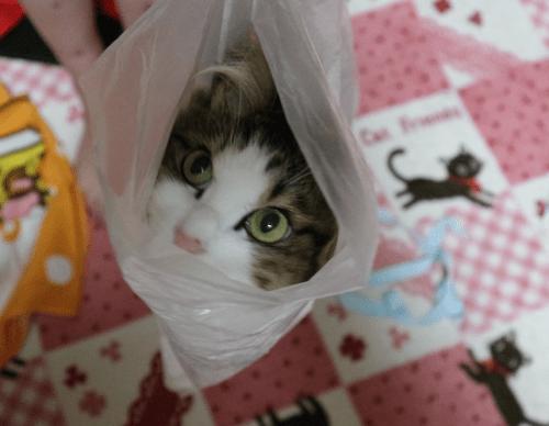 猫ブログ 可愛い猫