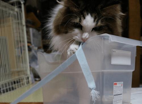 新しい箱と猫