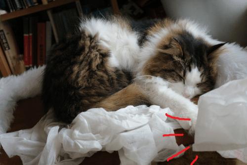 袋を被るのをあきらめた猫