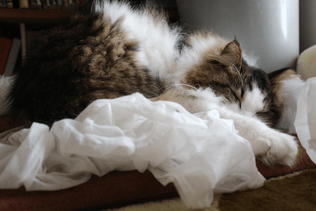 袋を被るのをあきらめて寝る猫