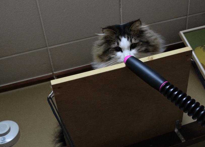 セルライ子から逃げる猫