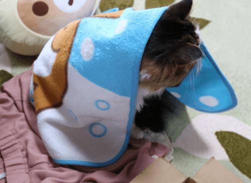 ブランケットの中から覗く猫