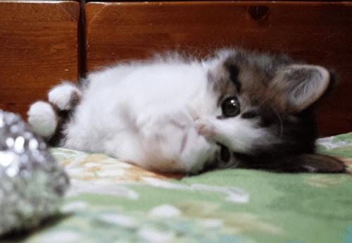 ヒメちーの子猫時代