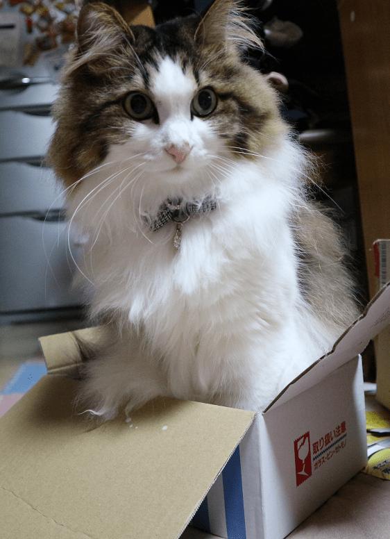 小さすぎる箱に入る猫