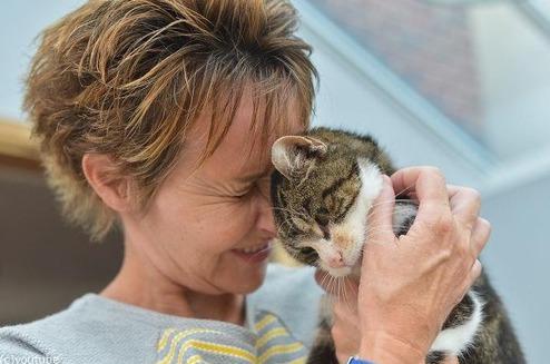13年間行方不明だった猫が見つかったニュース