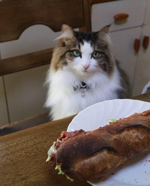 パンのにおいをかぐ猫