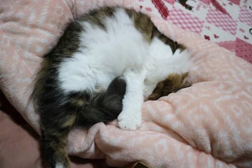 猫用ロールクッション